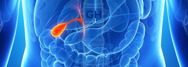 Gallbladder illuminated in medical illustration highlighting conditions of the gallbladder that may require removal by a surgeon like Dr. Guillermo Higa in Tucson, Arizona